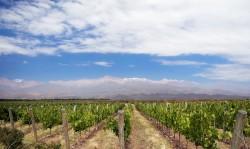 Mendoza floresce em pleno deserto