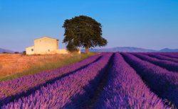 O verão na Provence e na Toscana tem flores e muito charme! Veja os pacotes