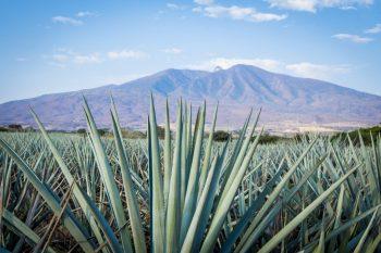 Faça a rota da tequila premium nessas férias