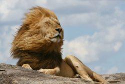 """Explore o parque que inspirou os cenários de """"O Rei Leão"""""""