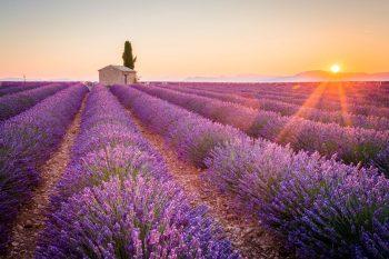 5 lugares na Europa para ver as flores na primavera