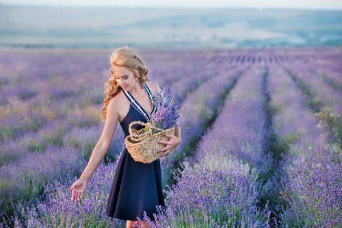 Primavera na Europa: 5 locais para ver campos de flores